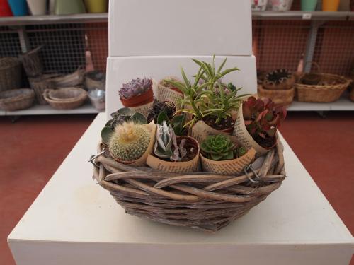 Lac me shop composizione di 5 piante grasse - Composizione piante grasse giardino ...